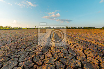 Fototapeta The land is dry and parched because of global warming.