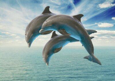 Fototapeta three  jumping dolphins