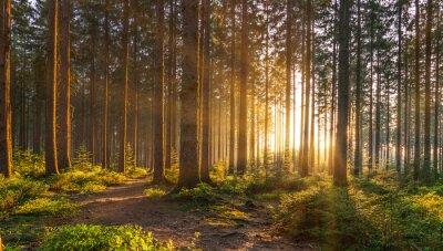 Fototapeta Tichý les na jaře s krásnými jasnými paprsky slunce