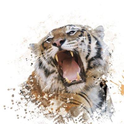 Fototapeta Tiger Portrét Akvarel