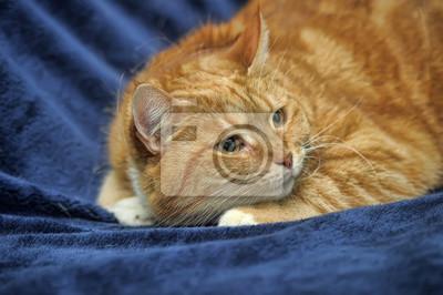 Těsné dospívající kočička fotky