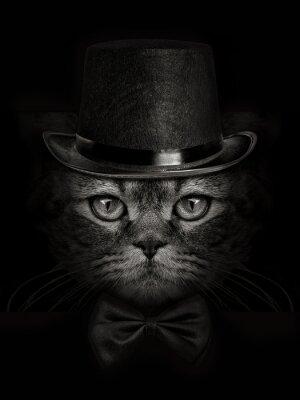 Fototapeta Tmavá tlama kočka close-up v klobouku a kravatu motýla