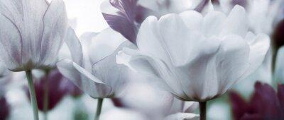 Fototapeta tónovaná tulipány koncept