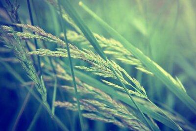 Fototapeta tráva