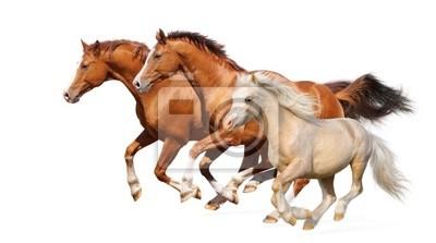 Fototapeta Tři koně cval