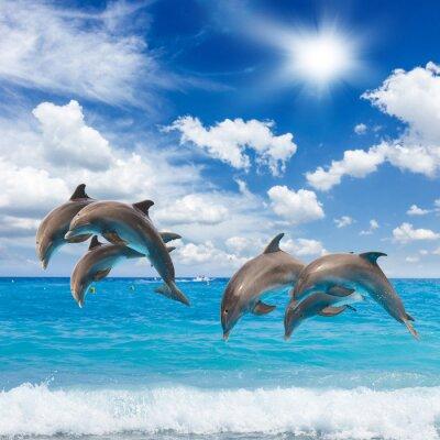 Fototapeta Tři skákání delfíni