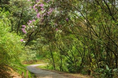 Fototapeta trilha entre árvores