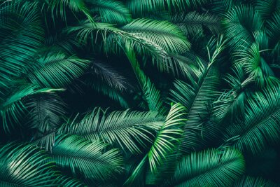 Fototapeta tropical forest natural background, nature scene in green tone style