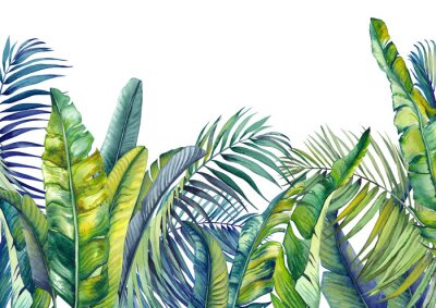 Fototapeta Tropical palm and banana leaves. Jungle wallpaper. Isolated watercolor background.