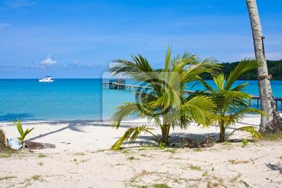 Fototapeta Tropická pláž s exotickými palmami na sand.Thailand