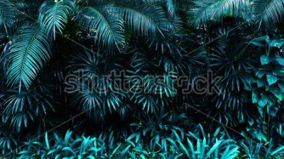 Fototapeta tropické listy lesa v tmavém pozadí. Vysoký kontrast.