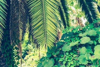 Fototapeta Tropické pozadí palmových listů