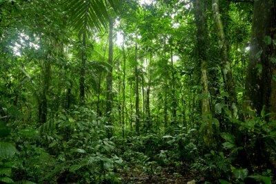 Fototapeta Tropický deštný prales krajiny, Amazon