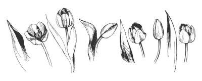 Fototapeta Tulipán květ grafické ilustrace dekorativní příroda umění