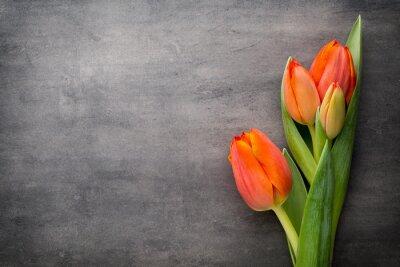 Fototapeta Tulipány, pomerančový na šedém pozadí.