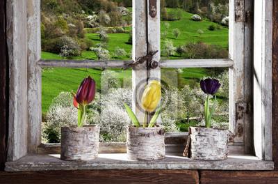 Fototapeta Tulipány u okna při pohledu na krajinu