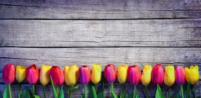 Fototapeta Tulipány v řadě na Vintage Plank - Spring Background