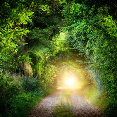 Fototapeta Tunel aus Baumen Führt ins Licht