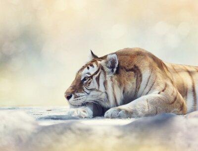 Fototapeta Tygr odpočívá na skále