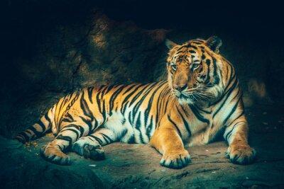 Fototapeta tygr s kamenné horské pozadí v temné ponuré majestátní nebezpečný, děsivý pocit barevný efekt.