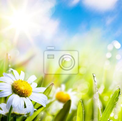 umění abstraktní pozadí letní květiny v trávě s kapkami vody
