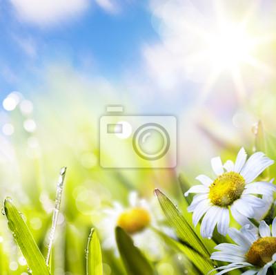umění abstraktní pozadí springr květina v trávě na slunci obloze