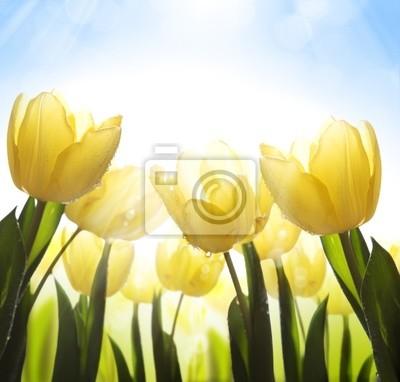 umění divokých květin pokryté rosou na slunci