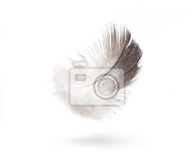 umění holubice bílé peří na bílém pozadí