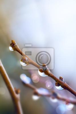 Umění krásný jarní větev s kapkami deště