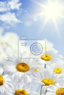 umění květinové jaře nebo v létě na pozadí