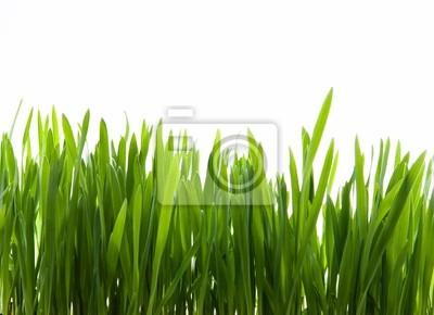 umění zelené trávě na bílém pozadí