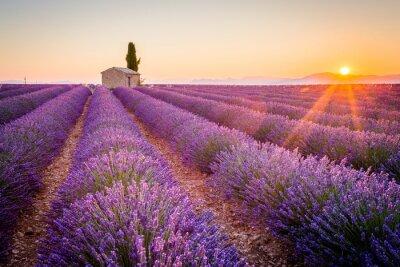Fototapeta Valensole, Provence, Francie. Lavender pole plné fialové květy