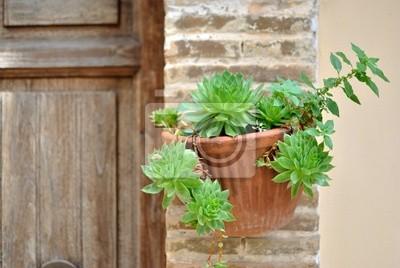 Vaso da parete con piante ornamentali fototapeta - Piante da parete ...
