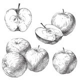 Rucni Kresleni Jablka Na Jablon Vetev Fototapeta Fototapety Chutny
