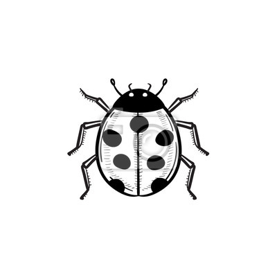 Vektor Rucne Kreslene Berusky Obrys Ikonu Doodle Ladybug Skica