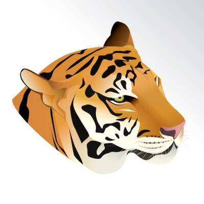 Fototapeta Vektorové ilustrace tygr hlavou portrét na bílém pozadí.