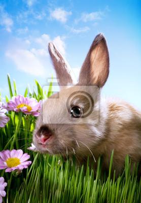 velikonoční dítě králík na zelené trávě