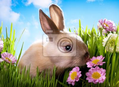 velikonoční dítě králík na zelené trávě s jarními květinami