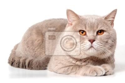 Velká kočička s vlasy