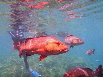 Fototapeta Velký bariérový útes Fish