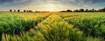 Fototapeta Venkovské krajiny s pšeničném poli na západ slunce