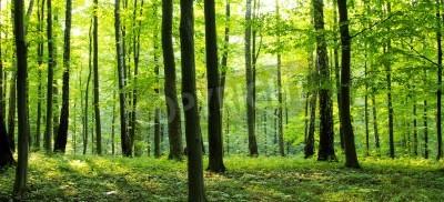 Fototapeta Venkovské silnici přes les plný stromů.