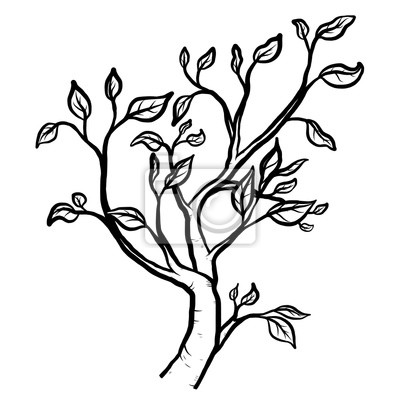 Vetve Stromu Kresleny Vektorove A Ilustrace Cerne A Bile