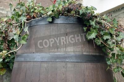 Fototapeta Vinná réva roste ze sudu dřeva tmavého