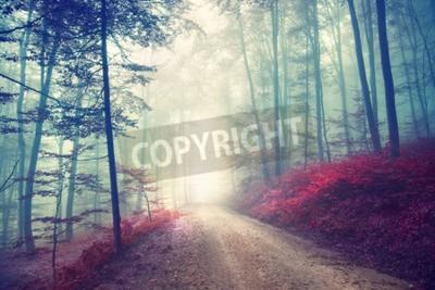 Fototapeta Vintage barevný efekt na podzim lesní cesta s fantasy světla. Vintage efekt filtru použity.