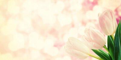 Fototapeta Vintage Pohlednice s tulipán květiny