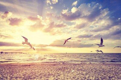 Fototapeta Vintage tónovaný pláž s létajícími ptáky při západu slunce