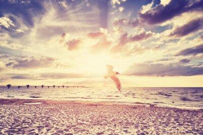 Fototapeta Vintage tónovaný západu slunce nad mořem s létající pták v popředí.