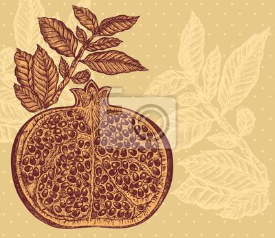 Vintage Vektorove Rucni Kresba Z Granatoveho Jablka Fototapeta