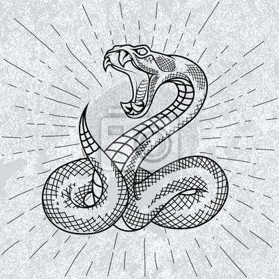 Viper Had V Hvezdach S Grunge Pozadi Rucne Kreslena Ilustrace